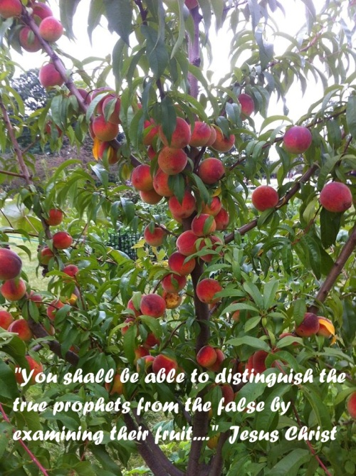 fruit and truth