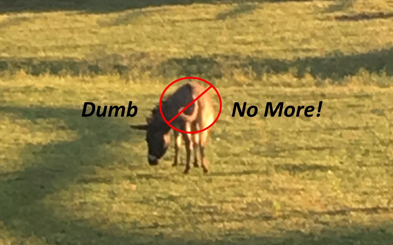 dumbass no more